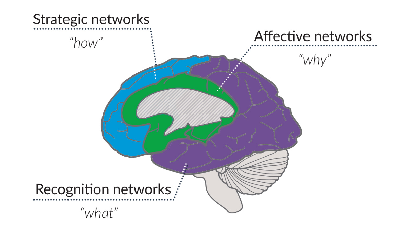 Illustration of the brain with the 3 UDL networks highlighted