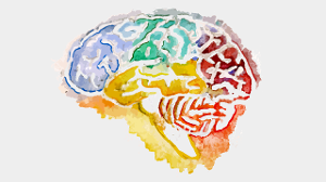 Watercolor image of a brain
